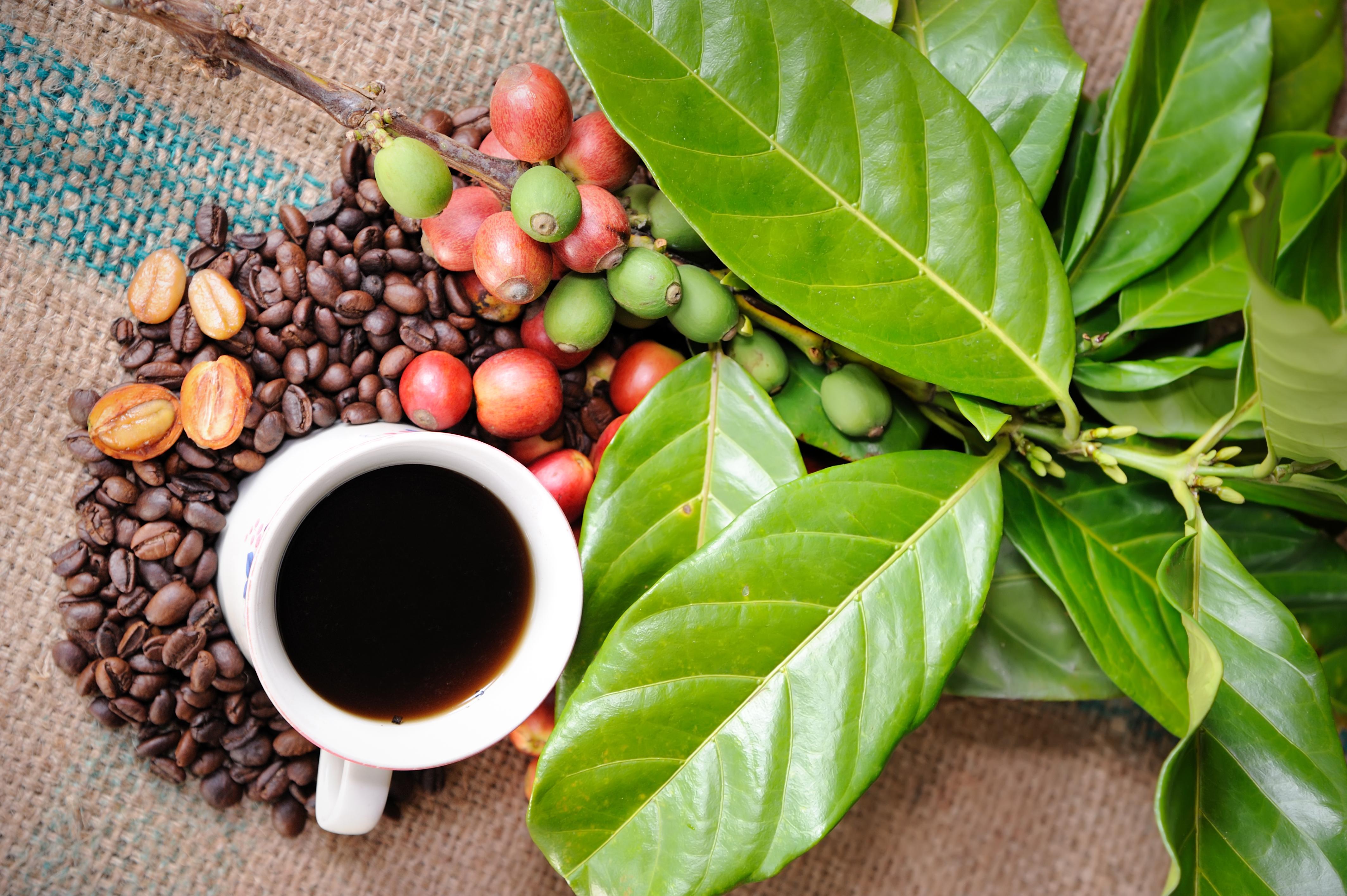 Удаление кофеина