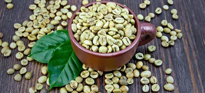 Как заваривать зеленый кофе